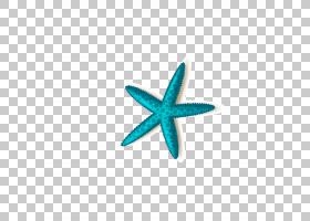 长隆海洋王国海星珠海,海星PNG剪贴画蓝色,化学元素,动物,蓝绿色,
