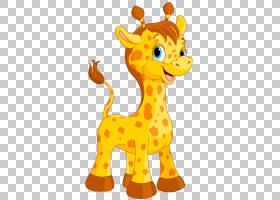 长颈鹿卡通绘图,可爱的长颈鹿卡通,长颈鹿PNG剪贴画哺乳动物,摄影