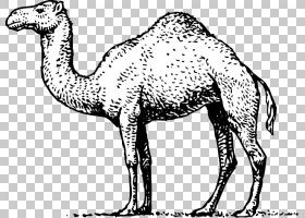 单峰骆驼皇冠,卡通手绘骆驼PNG剪贴画水彩画,卡通人物,哺乳动物,