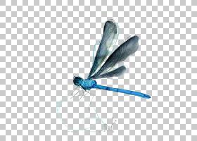蜻蜓,水彩蜻蜓PNG剪贴画水彩画,蓝色,水彩叶子,画,手,昆虫,卡通,