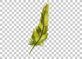 水彩画羽毛,水彩羽毛PNG剪贴画水彩叶子,动物,叶子,手,孔雀羽毛,