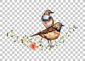 水彩绘画绘图鸟,卡通鸟站立分支画水彩花PNG剪贴画水彩叶子,分支,