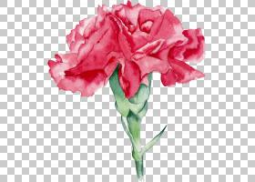 水彩:鲜花水彩画花园玫瑰,水彩花卉PNG剪贴画草本植物,水彩叶子,
