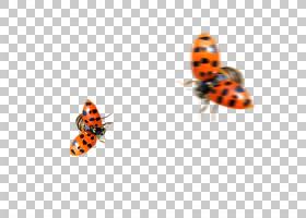 瓢虫,飞行瓢虫PNG剪贴画画,刷脚蝴蝶,手,橙色,昆虫,卡通,封装Post