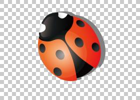 瓢虫昆虫Coccinella septempunctata,红色卡通七星瓢虫PNG剪贴画