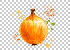 洋葱圈蔬菜水彩画,绘图洋葱PNG剪贴画食品,橙色,番茄,生日快乐矢