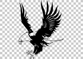 秃头鹰只是老鹰黑白鹰鹰,卡通的老鹰PNG剪贴画脊椎动物,单色,猎鹰