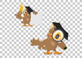 猫头鹰文凭,猫头鹰剪辑3 PNG剪贴画动物,食肉动物,摄影,狗像哺乳