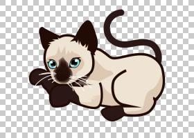 暹罗猫小猫泰国猫缅因浣熊孟加拉猫,暹罗PNG剪贴画哺乳动物,动物,
