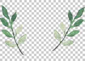 水彩叶子,两个绿色藤蔓的PNG剪贴画水彩画,水彩叶子,叶子,分支,生