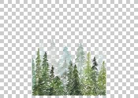水彩画版画打印绘图,水彩树林,松树画PNG剪贴画水彩叶子,画,叶,手
