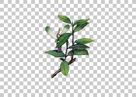 水彩画绿色,卡通植物水彩蜻蜓向导PNG剪贴画水彩叶子,叶子,分支,