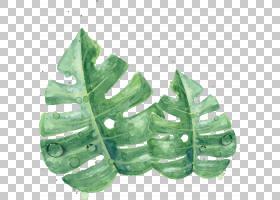 叶水彩画绿色皮肤,水彩绿叶,twoswiss奶酪叶PNG剪贴画水彩叶子,颜