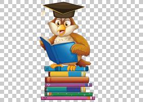 书阅读,猫头鹰PNG剪贴画动物,摄影,脊椎动物,生日快乐矢量图像,卡