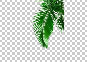 Arecaceae叶白色,绿色棕榈叶材料,绿叶PNG剪贴画摄影,科,颜色,棕