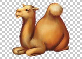 独峰驼双峰驼卡通股票摄影,骆驼卡通PNG剪贴画卡通人物,哺乳动物,