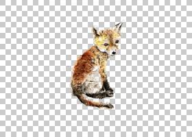 红狐狸灰狼银狐北极狐,狐狸PNG剪贴画水彩绘画,哺乳动物,动物,猫
