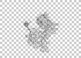 绘画工笔线艺术u767du63cfu753b,菊花PNG剪贴画单色,花卉,虚构人