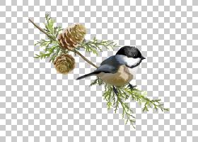 股票,松树和鸟类PNG剪贴画叶,摄影,分支,鸣禽,动物,树枝,卡通,尾