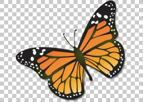帝王蝶昆虫,卡通帝王蝶PNG剪贴画刷脚蝴蝶,演示文稿,飞行,动物,变