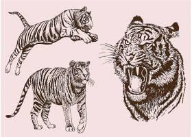 生动的老虎动物手绘矢量插画