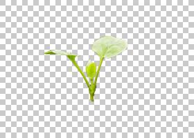 绿叶模式,树幼苗PNG剪贴画其他,叶子,电脑壁纸,草,桌面壁纸,设计,