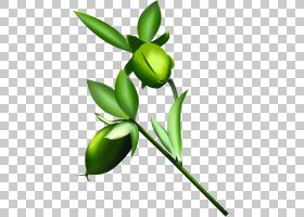 荷荷巴油天猫淘宝阿里巴巴集团,橄榄PNG剪贴画叶,橄榄,分支机构,