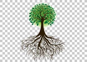 根树绘图,根PNG剪贴画分支,植物茎,免版税,根系统,植物,有机体,橡