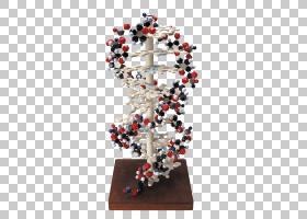 研究所生物医学研究科学公司,生物模型材料PNG剪贴画名人,装潢,生
