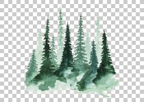 研究树水彩画松,森林,绿色圣诞节树PNG clipart画,手,贴纸,绘画,