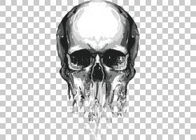 头骨欧几里得,头骨,白色和灰色头骨PNG剪贴画T恤,其他,徽标,单色,