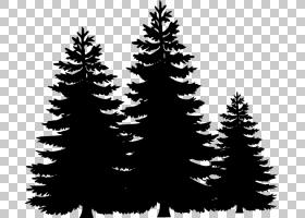 松树冷杉,简单树大纲PNG剪贴画分支,圣诞节装饰,网站,云杉,针叶树