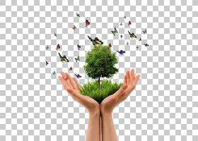 树手版画,飞蝴蝶PNG剪贴画蝴蝶群,昆虫,装饰,草,绿树,蝴蝶,绿色,