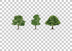 树热带雨林Adobe Illustrator,精美的丛林PNG剪贴画模板,叶,草,细