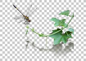 宜兴粘土茶壶潮州宜兴粘土茶壶西瓜,藤蔓上的蜻蜓PNG剪贴画叶,分