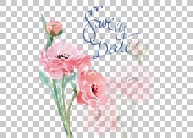 水彩画婚礼邀请绘图,水彩粉红色的花,玫瑰与保存日期文本覆盖PNG