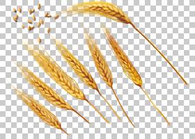 普通小麦耳朵大麦,小麦,金色PNG剪贴画食品,金色框架,全谷物,弓,