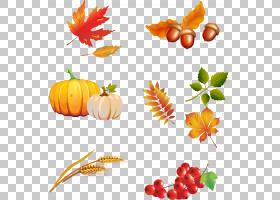Autumn Encapsulated PostScript,秋季PNG剪贴画天然食品,cdr,食