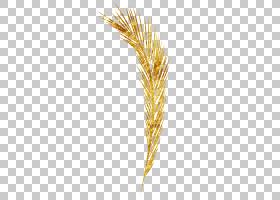 Emmer模式,小麦PNG剪贴画羽毛,粮食粮食,麦田,矢量小麦,卡通小麦,