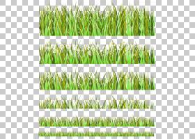 Euclidean,Rice PNG剪贴画植物茎,稻田,生日快乐矢量图像,草,稻稻