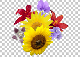 花,花束花PNG剪贴画插花,向日葵,桌面壁纸,花卉,雏菊家庭,郁金香,