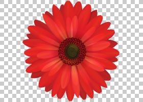 花德兰士瓦雏菊股票摄影,水彩树PNG clipart蓝色,花卉,免版税,封