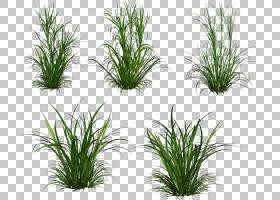 草本植物,草PNG剪贴画3D计算机图形学,草,桌面壁纸,水族馆装饰,灌
