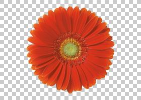 薄纸手扇制造,花红色红花框架PNG剪贴画灯笼,橙色,TECHNIC,颜色,