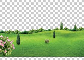 Lichun海报,春天新的绿色背景影响PNG clipart效果,风景,电脑壁纸