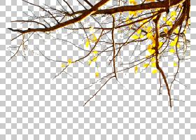 LINE,戴德伍德树秋天太阳PNG clipart其他,叶,分支,电脑壁纸,对称