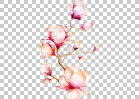 水彩绘画玉兰花,兰花,粉红色的花b PNG剪贴画插花,摄影,科,植物茎
