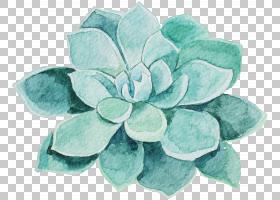 水彩绘画花,多肉植物,绿叶艺术品PNG剪贴画蓝色,卡通,鲜花,手绘花