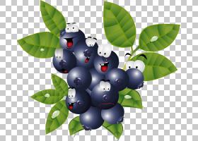 漫画食品蓝莓,浆果PNG剪贴画食品,摄影,蓝莓,卡通,水果,覆盆子,植
