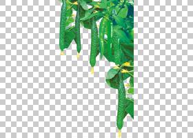 蔬菜黄瓜瓜,黄瓜PNG剪贴画食品,叶,海报,甜瓜,水果,蔬菜,黄瓜卡通